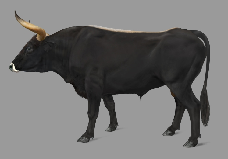vig_aurochs_8_14_13_copy_by_phan_tom_d6i70zc_by_phan_tom-d6i8why